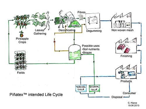 Pinatex production process The Sustainable Angle